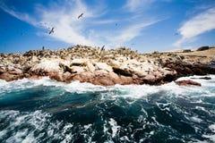 De Eilanden van Ballestas, Peru Stock Afbeeldingen