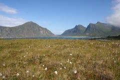 De Eilanden van Lofoten Stock Foto's