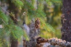 De eland valt provinciaal park Campbell River Royalty-vrije Stock Foto's