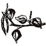 De elegante die takken van de kalligrafieberk met katjes op wit worden geïsoleerd vector illustratie