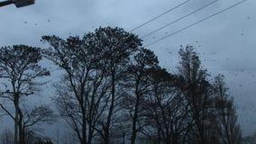 De elektrische draden en de grote troep van starlings vliegen snel van een groep bomen in de avondlicht van Engeland stock videobeelden