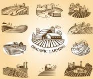 De Elementen van het Ontwerp van de organische Landbouw Royalty-vrije Stock Foto