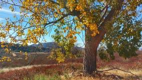 De elsboom van het land Stock Foto