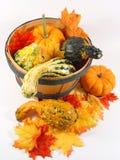 De emmer van de pompoen voor de herfstseaso Royalty-vrije Stock Fotografie