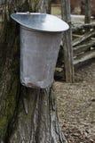 De emmer van het sap hangt van esdoornboom Royalty-vrije Stock Foto