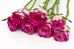 De emmer van rozen Royalty-vrije Stock Foto's