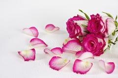 De emmer van rozen Stock Fotografie