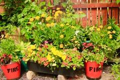 De Emmers van de bloemenbrand op klein Terras Royalty-vrije Stock Fotografie