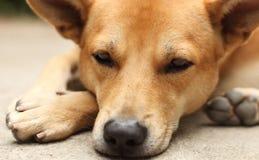 De Emotie van de hond Stock Fotografie