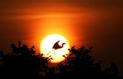 De engel van de aigrette stock foto