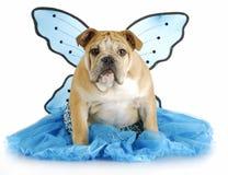 De engel van de hond Stock Foto's