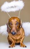 De engel van de hond Stock Afbeelding