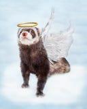De Engel van het huisdierenfret in Wolken Royalty-vrije Stock Foto's