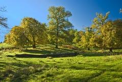 De Engelse bomen stock fotografie