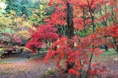 De Engelse herfst Stock Foto