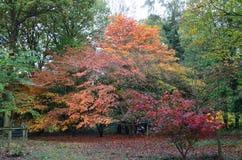 De Engelse herfst Stock Afbeelding