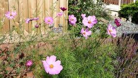 De Engelse tuin van het land stock fotografie