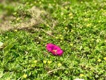 De enige bloem stock foto's