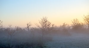 De enige dageraad van het vogelsilhouet Stock Afbeeldingen