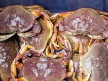 De enige krab van zoet waterdungeness in de wereld op het Westen Coa royalty-vrije stock fotografie