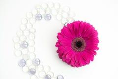 De enige magenta bloem van Gerberajamesonii met glasparels Stock Afbeelding