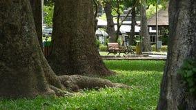 De enorma träden med gräs på parkera i den Mekong deltan, Vietnam stock video