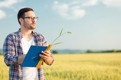 De ernstige jonge agronoom of de landbouwer die tarwe meten plant grootte op een gebied, schrijvend gegevens in een vragenlijst stock afbeelding