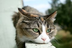 De ernstige kattendromen van het leven Stock Foto's