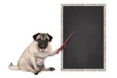 De ernstige pug zitting van de puppyhond naast leeg bordteken, holdings rode wijzer royalty-vrije stock foto's