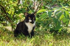 De ernstige zwart-witte kat met gele ogen zit op een gras in een park Royalty-vrije Stock Afbeelding