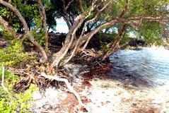 De erosie van het strand stock afbeeldingen