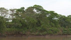 De Erosie van de rivierbank en het Dichtslibben, Casanare, Colombia stock videobeelden