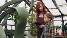 De ervaren vrouwelijke tuinman en haar leuke dochter bekijken installaties in serre en sprekend, is de gevende moeder stock footage