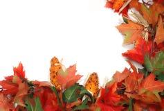 De esdoorn doorbladert en graan - de juiste lage Dankzegging van de connergrens Stock Afbeeldingen