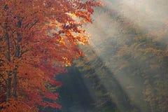 De Esdoorn en de Zonnestralen van de herfst Royalty-vrije Stock Afbeeldingen