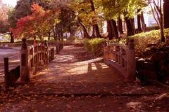 De esdoorn` s bladeren waren gevallen in het park stock foto