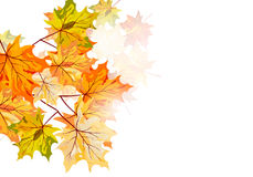 De esdoorn van de herfst Stock Foto's