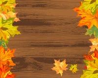 De esdoorn van de herfst Stock Fotografie