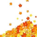 De esdoorn van de herfst Stock Afbeeldingen