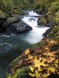 De Esdoorn van de herfst gaat naast een bergstroom weg Stock Foto