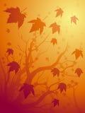 De esdoornachtergrond van de herfst Royalty-vrije Stock Afbeeldingen