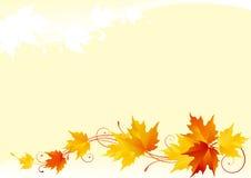 De esdoornachtergrond van de herfst Stock Fotografie