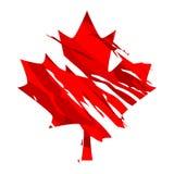 De esdoornblad van Canada Stock Afbeeldingen