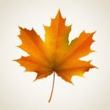 De esdoornblad van de herfst Het is geïsoleerdd Royalty-vrije Stock Afbeeldingen