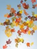 De esdoornbladeren van de herfst Royalty-vrije Stock Foto