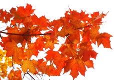 De esdoornbladeren van de herfst stock afbeeldingen