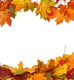 De esdoornbladeren van de herfst die op witte achtergrond worden geïsoleerda Royalty-vrije Stock Afbeelding