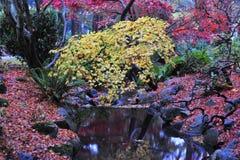 De esdoornbomen van de herfst in park Stock Afbeeldingen