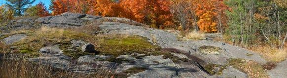 De esdoorns van de herfst in rotsachtig Canadees Schild Royalty-vrije Stock Fotografie