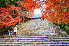 De esdoornseizoen van Nice, Japan Royalty-vrije Stock Afbeelding